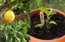 یک میوه را خیلی آسان به دهها میوه تبدیل کنید!