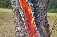 شعلههای آتش در درون تنه یک درخت