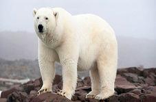 کشتن یک خرس قطبی در خانهای روستایی