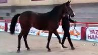 انتخاب زیباترین اسبهای اصیل ایرانی، رقایتی جذاب در شهرستان اردکان