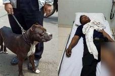 حمله مرگبار سگ پیتبول به نگهبان امنیتی