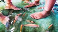 در این رستوران غذا بخورید و پدیکور ماهی انجام دهید