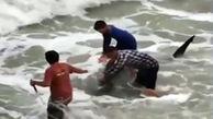 نجات یک کوسه بزرگ به دست ماهیگیران