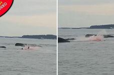 اتفاق وحشتناکی که گردشگران را در ساحل به وحشت انداخت!