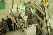 رسم عجیب مردم پاکستان برای عید قربان