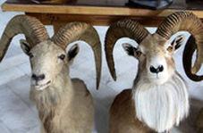 نصب سَرِ تاکسیدرمی شده حیوانات در اداره محیط زیست!