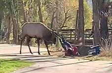 حمله یک گوزن به بازدیدکنندگان در پارک جنگلی