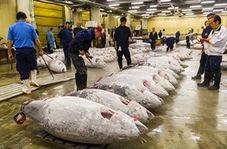 تعطیلی بزرگترین ماهی فروشی دنیا در ژاپن + فیلم