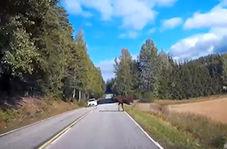 تصادف یک گوزن با خودروی سواری در جاده جنگلی + فیلم